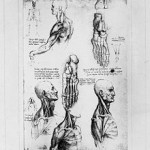Anatomical_Studies