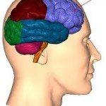 lobulo frontal