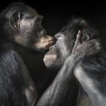 monos enamorados
